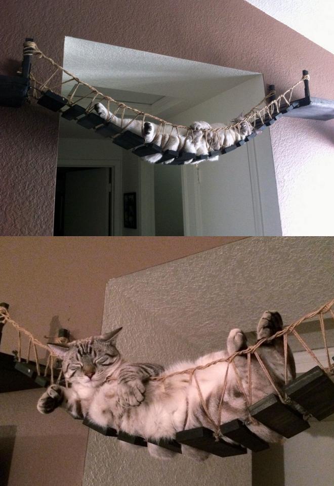For Indiana Jones loving cats