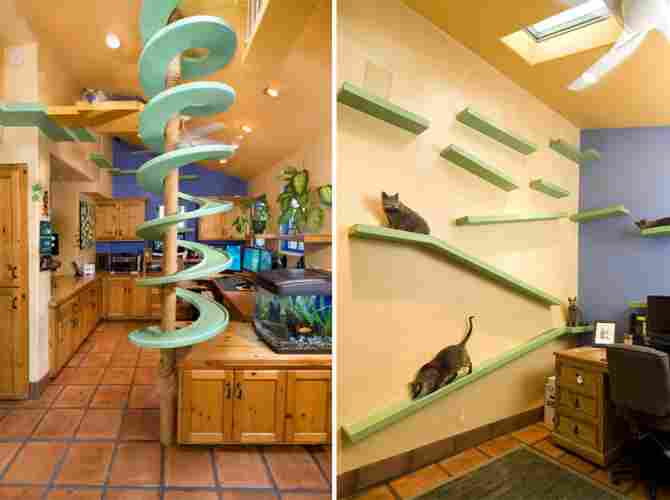 The paradise of cats