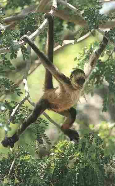 Tipos De Monos Primates Y Simios