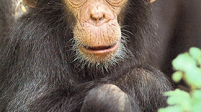 Types of monkeys, primates and apes