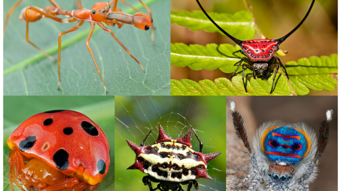 The strangest and most amazing spiders