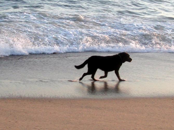 Пляж Фламенка, в Ориуэла Коста - Торревьеха (Аликанте)