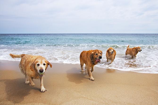 Собачий пляж Террон, Лепе (Уэльва)