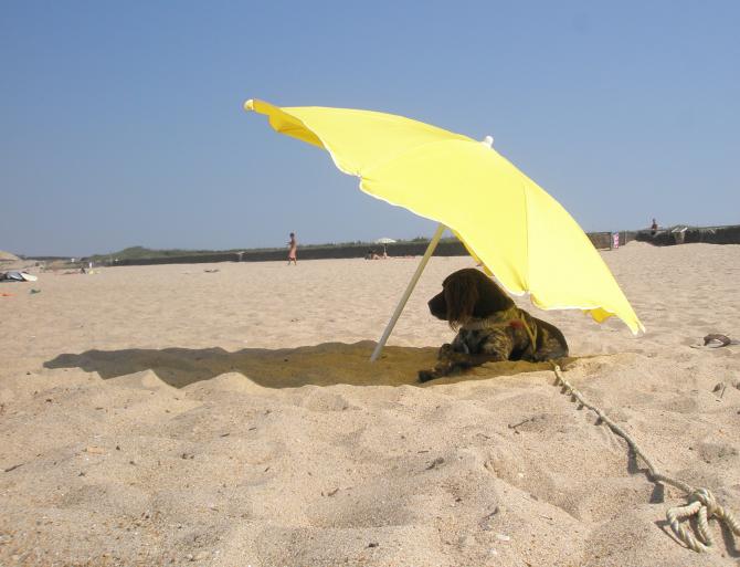 Los Tusales beach, Guardamar del Segura (Alicante)