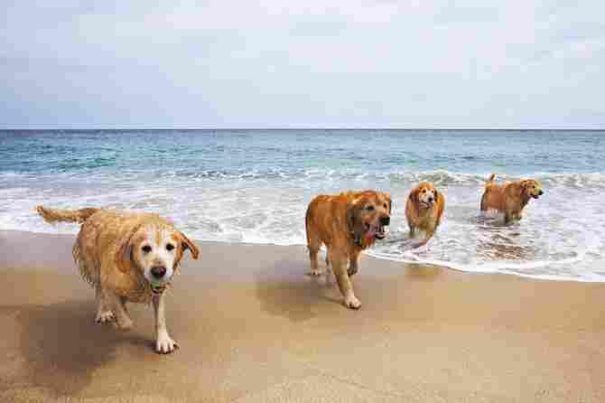 Playa canina del Terrón, Lepe (Huelva)
