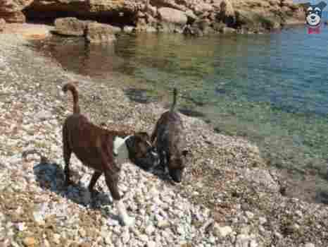 Playa de Bon Caponet, Ametlla de Mar (Tarragona)