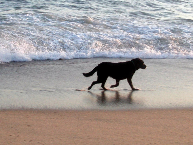 Playa Flamenca, in Orihuela Costa - Torrevieja (Alicante)