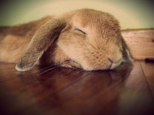 安静地睡觉