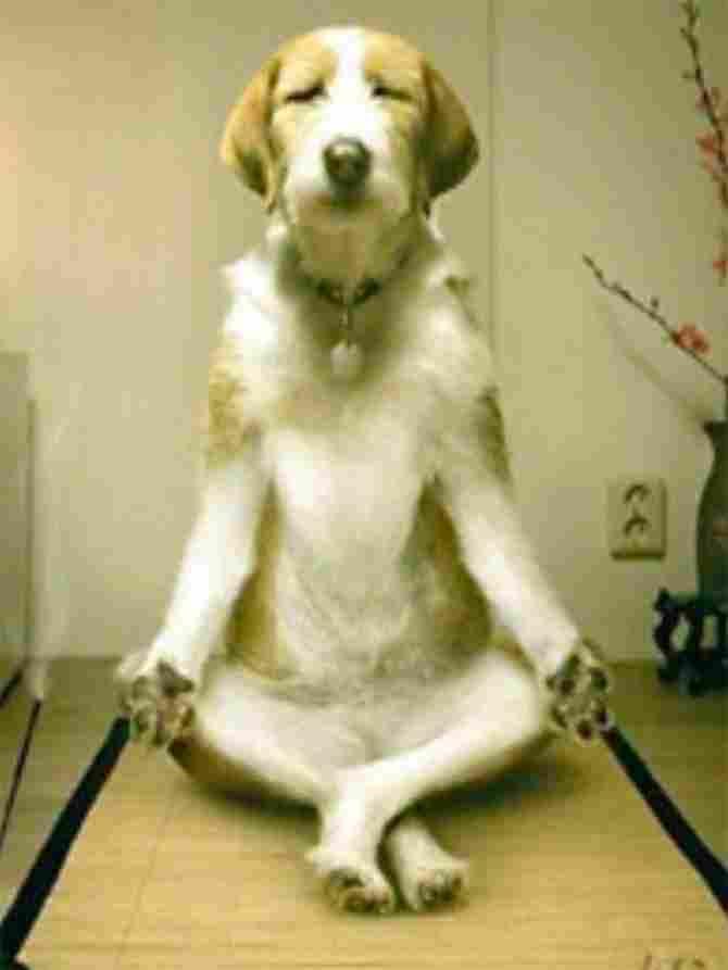 Así ¡no vale! El yoga lo inventaron los humanos