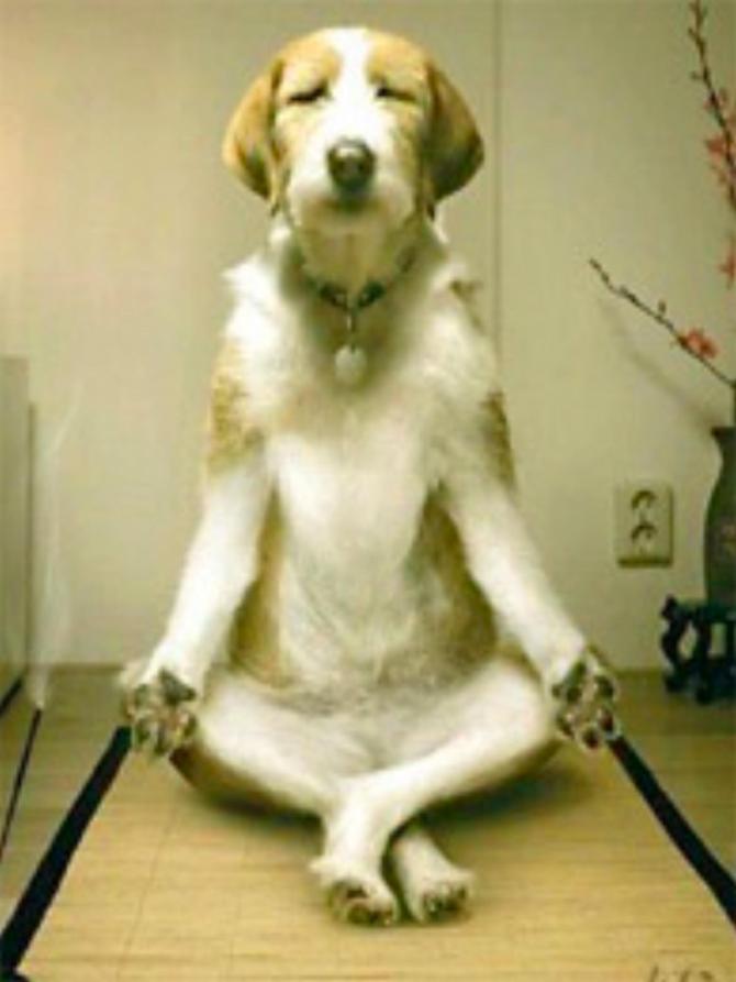 Donc ça ne marche pas! Le yoga a été inventé par l'homme