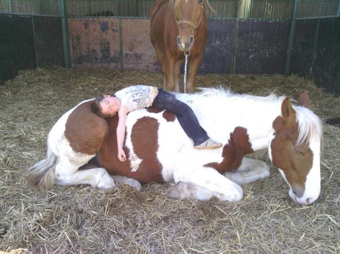 Le cheval s'est endormi et le chevalier s'est endormi
