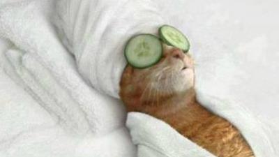 Os animais mais relaxados