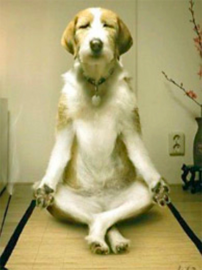 Så det fungerar inte! Yoga uppfanns av människor