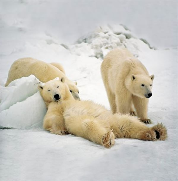 Un oso muuuy tranquilo