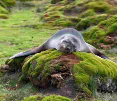 Una foca sin problemas