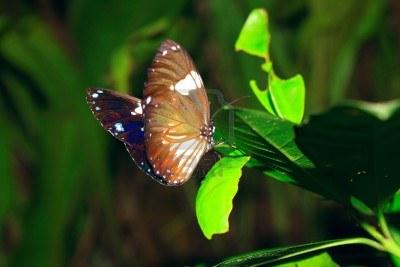 У этих насекомых нет легких. Они дышат через отверстия по бокам их тел, называемые дыхальцами.