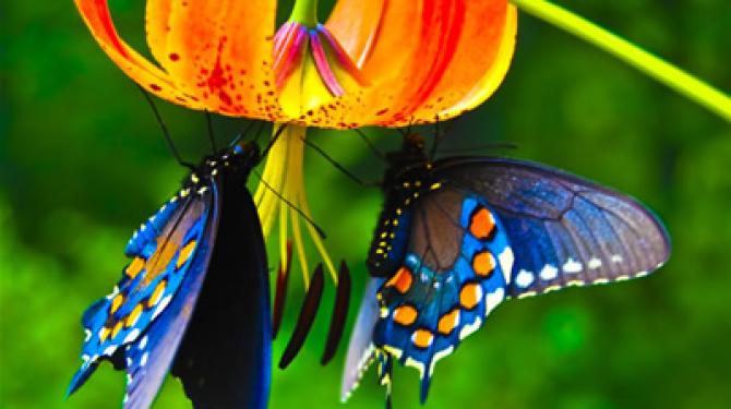 Курьезы о бабочках