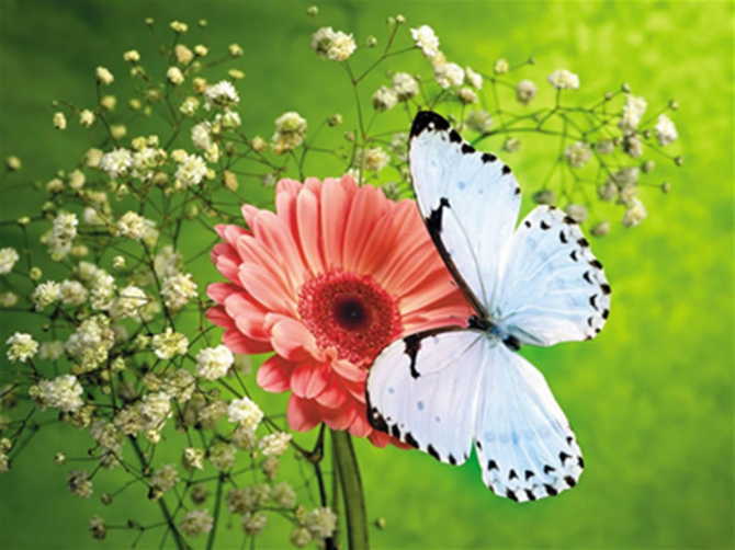 A borboleta de vida mais longa é capaz de viver de 9 a 10 meses.