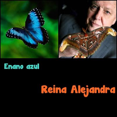 "A menor borboleta é a anã azul e a maior é a fêmea ""Queen Alexandra"" Bird Wings."