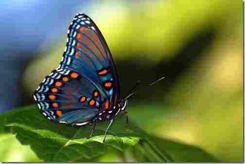 Butterflies can taste food with their feet.
