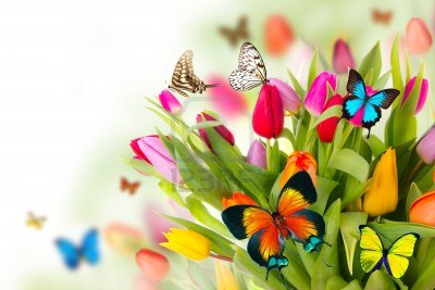 Butterflies need to sun their wings to fly.