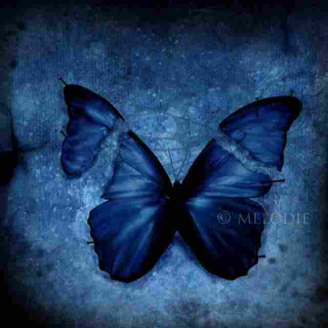 Even a soft touch can damage the wings of a butterfly.