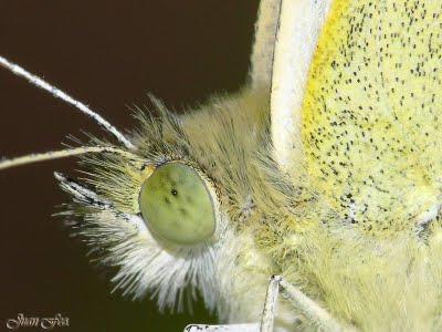 The eyes of these creatures are composed and have more than 6,000 individual lenses.