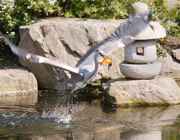 Голландский парк