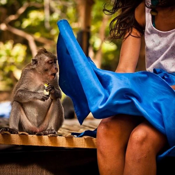 A very curious monkey