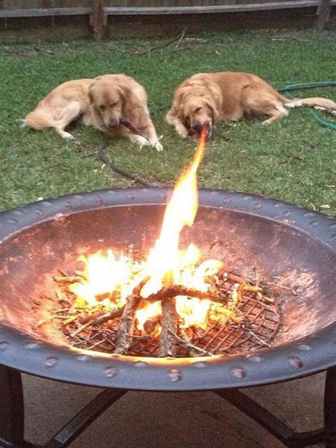 Är det en hund? Nej! Det är en drake!