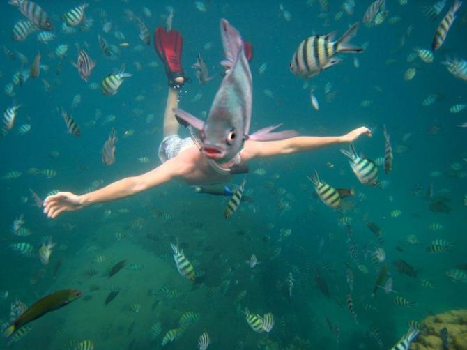 Fisk ansikte (eller en fisk med baddräkt)