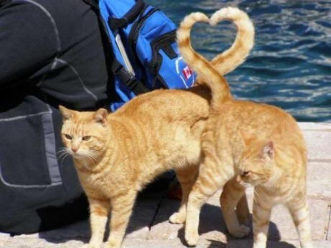 Kattungar i kärlek
