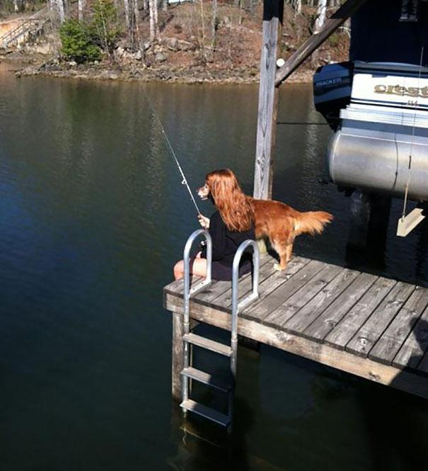 Perro pescador